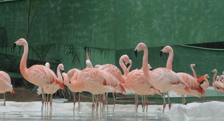 Zoo Pomerode nos arredores de Blumenau