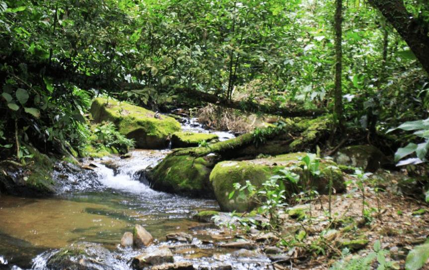 Parque das Nascentes em Blumenau: Pedras