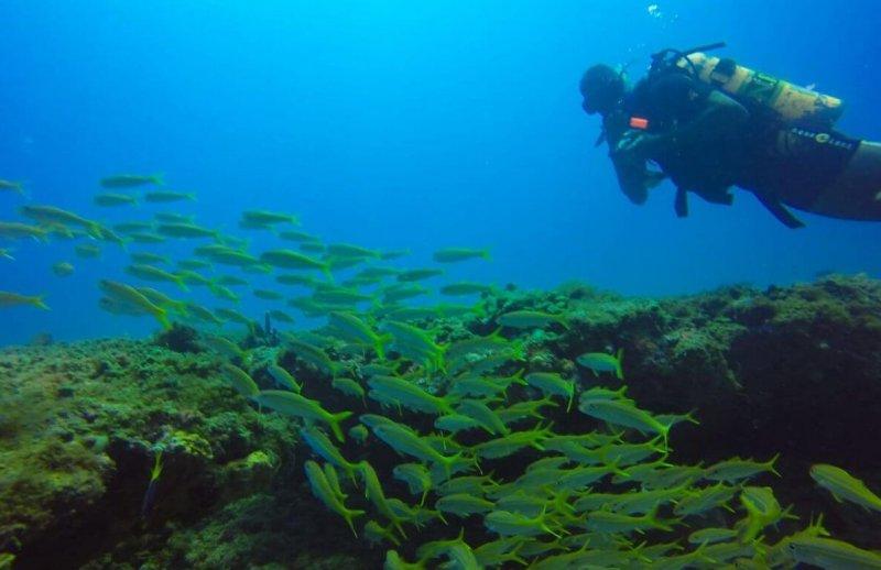 Deficientes físicos em Maceió: vida marinha