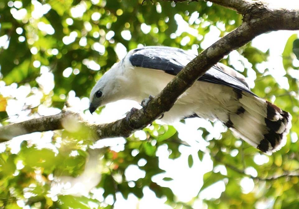 Diversas espécies de pássaros no Parque Municipal de Maceió