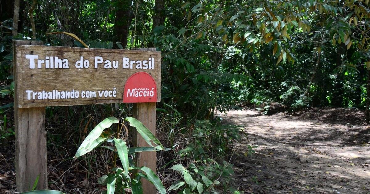 Trilhas no Parque Municipal de Maceió