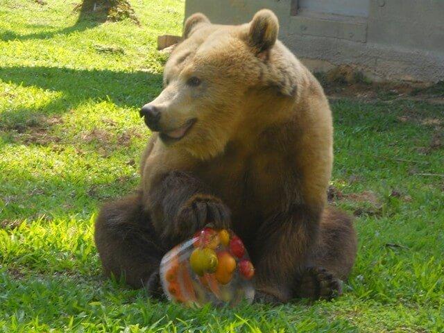 Zoo Pomerode nos arredores de Blumenau: Urso