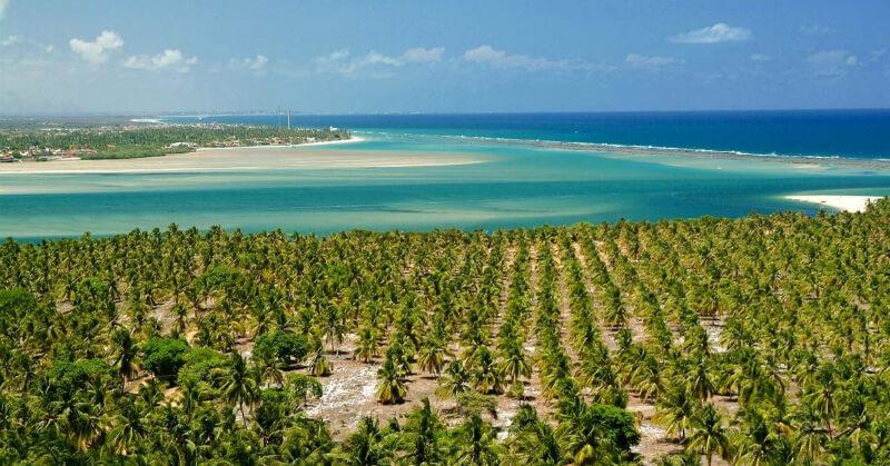 Coqueirais na praia do Gunga em Maceió