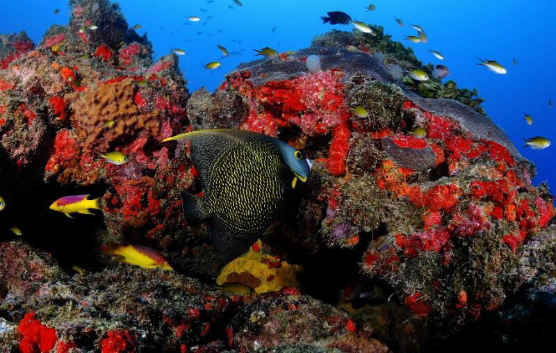 Corais coloridos das piscinas naturais de Maragogi em Maceió