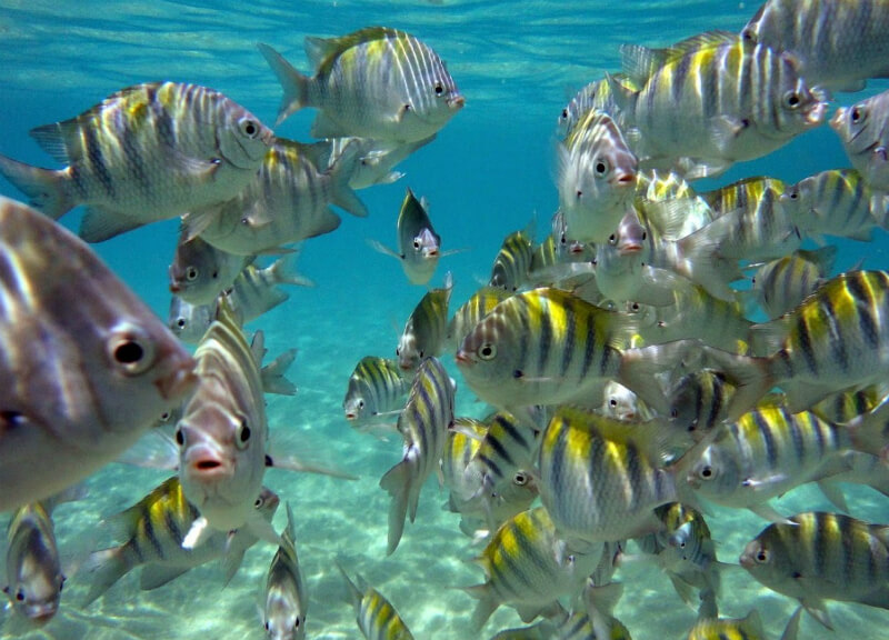 Vida marinha abundante em Maragogi em Maceió